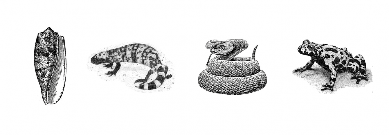 Can cataloging venoms' effects lead to drug discovery? | Columbia Giving